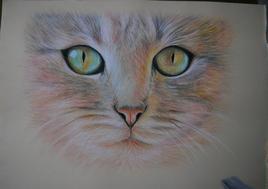 Regard chat réalisé au pastel