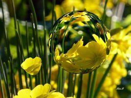 Bulle de fleur jaune