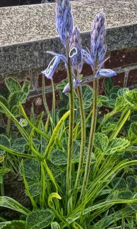 2 fleurs mauves
