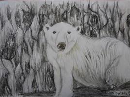 Dessin L'ours polaire se repose