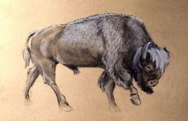 Bison ancestral