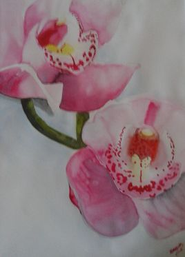orchidees roses