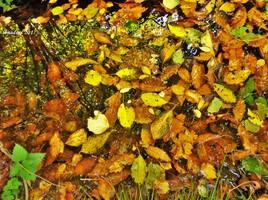 feuilles d'automne..