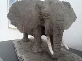 Eléphant d'Afrique face