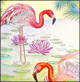 Flamants et nénuphars roses / Flamingos and pink nenuphars
