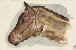 Mon cheval ''La perle noire''
