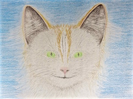 Dessin Chaton blanc Capelli / Drawing Capelli, a white kitten