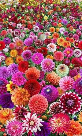 une fleur pour chacun