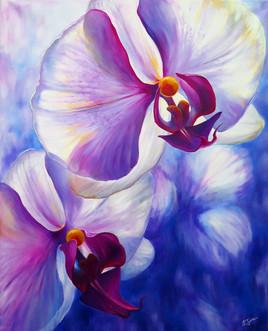 orchidées celestes