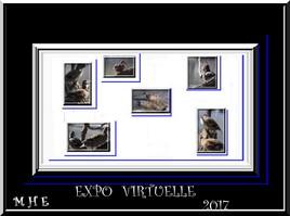 expo canard 2017