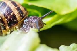 Petit escargot -8