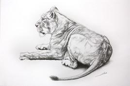 Dessin de Lionne