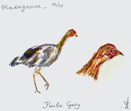 Poule gasy