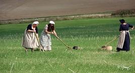 les paysannes sous napoléon
