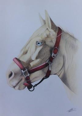 Portrait cheval/ Buffalo