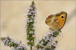 Butterfly nature photography - IMG_7199_2.