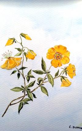 Peinture Petites fleurs des champs