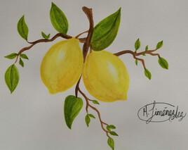 Branche de citronnier