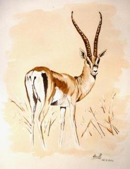 la gazelle de Grant