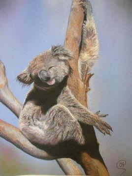 Koala - Peinture animalière au pastel