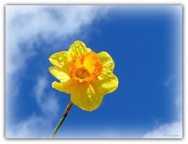 Quand le jaune et le bleu se marient, le Printemps sourit......