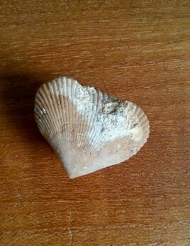 Coeur fossile - spécial dédicace pour Ana :)