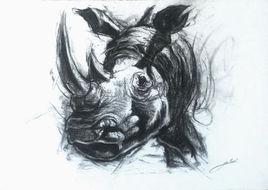 Rhinocéros au soleil