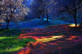rêve d'olivier