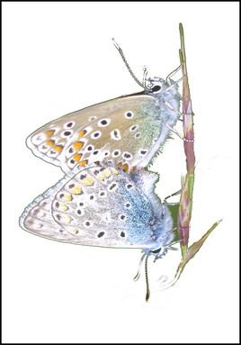 reflet de papillons