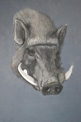Cochon aux pastels