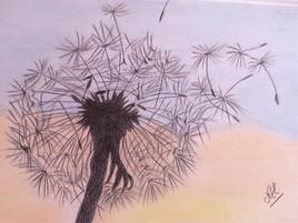 Dandelion dans le coucher de soleil
