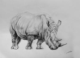 Dessin de rhinoceros
