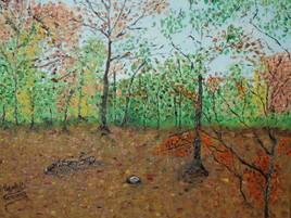 foret d'hesdin par une journée d'automne