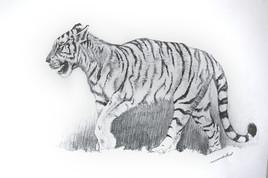 Marche de tigre