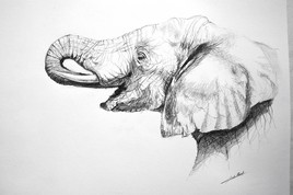 Dessin d'elephant profil