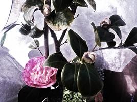 """Fleur du jardin"" par Vanessa Martinez 2015"