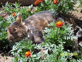 Chat dans les oeillets