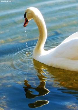 l'eau c'est la vie..