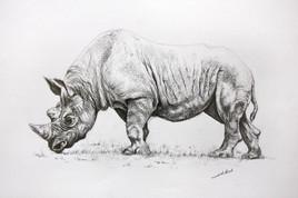 Dessin de rhinoceros 2