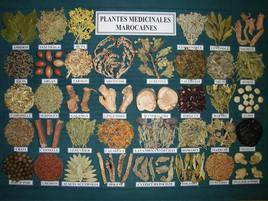 PLANTES MIDICINALES MAROCAINES