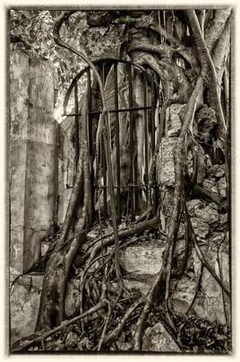 la prison emprisonnée 5 (Petit Canal - Guadeloupe) tirage dibond® 40 x 60 cm
