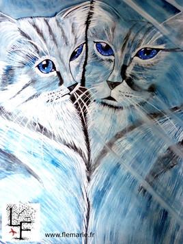 Reflet de chat