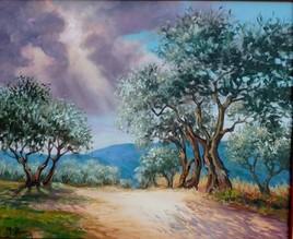Rayon de lumière sur les oliviers