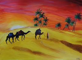 Coucher de soleil et dromadaires dans le désert tunisien