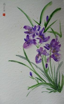 Iris Chinois
