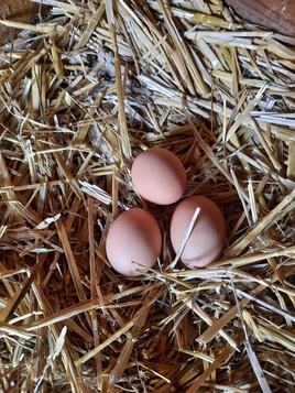 Et leurs œufs !