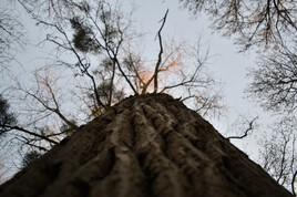 Sky roots