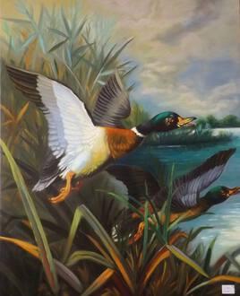 vol de canards sauvages