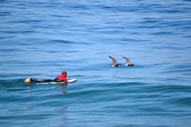 le surfeur et les oiseaux