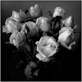 Photo bouquet de roses